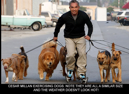 What Do Dog Walkers Charge Per Walk